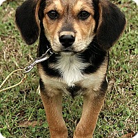 Adopt A Pet :: Ethan - Brattleboro, VT