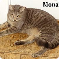 Adopt A Pet :: Mona - Bentonville, AR