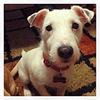 Adopt A Pet :: Bob - Knoxville, TN