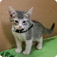 Adopt A Pet :: Squiggles - Modesto, CA