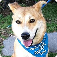 Adopt A Pet :: Laddie - Canoga Park, CA