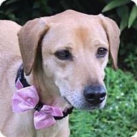 Adopt A Pet :: Lucy A78 - Loxahatchee, FL