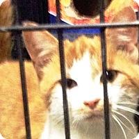 Adopt A Pet :: Frankie - Floyd, VA