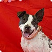 Adopt A Pet :: Blossom - Bradenton, FL
