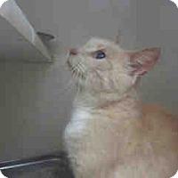 Adopt A Pet :: Priscilla - Newnan City, GA