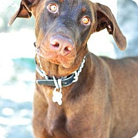 Adopt A Pet :: Ferdinand - Newhall, CA