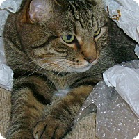 Adopt A Pet :: Sasah - Mobile, AL