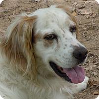 Adopt A Pet :: TOBY - Pine Grove, PA