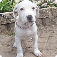 Adopt A Pet :: Neona - West Chicago, IL