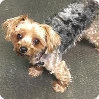 Adopt A Pet :: Sonny - Tempe, AZ