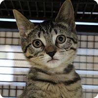 Adopt A Pet :: Puddin - Sarasota, FL