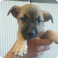 Adopt A Pet :: Betsey - Lexington, KY