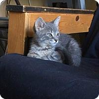Adopt A Pet :: Cloud - Toronto, ON