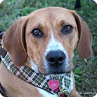Adopt A Pet :: Rocky - Bedford, VA