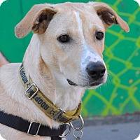 Adopt A Pet :: Marc Maron - Jersey City, NJ