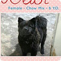 Adopt A Pet :: Bear - North Pole, AK