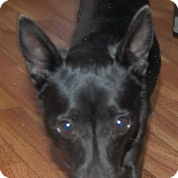 Adopt A Pet :: Pebbles - Manning, SC