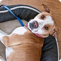 Adopt A Pet :: Princesse - Ottawa, ON