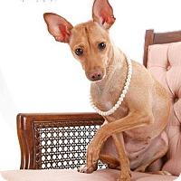 Adopt A Pet :: Baby - Princeton, MN
