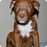 Adopt A Pet :: Zeke - Justin, TX