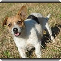 Adopt A Pet :: Charlie - Staunton, VA