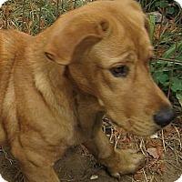Adopt A Pet :: Sebastian - Kingwood, TX