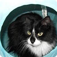 Adopt A Pet :: Ira - Milwaukee, WI