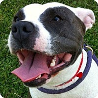 Adopt A Pet :: SUMMER - Valley Village, CA