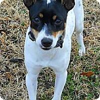 Adopt A Pet :: Jinglebell - Oklahoma City, OK