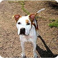 Adopt A Pet :: Ricky - Scottsdale, AZ