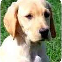 Adopt A Pet :: EDEN - Wakefield, RI