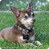 Adopt A Pet :: Bernie - Vacaville, CA