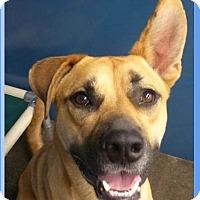 Adopt A Pet :: Aiden - Springdale, AR