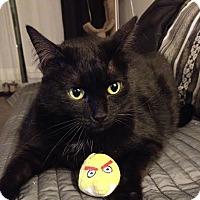 Adopt A Pet :: Olivia - Toronto, ON