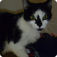 Adopt A Pet :: Lysette - Hamburg, NY
