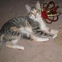 Adopt A Pet :: Chelsea - Duluth, GA