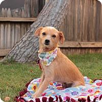 Adopt A Pet :: Winnie! - Redondo Beach, CA