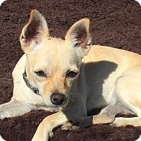 Adopt A Pet :: DOLLY - Rancho Cucamonga, CA