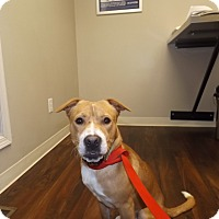 Adopt A Pet :: Ozzie - Quincy, IN