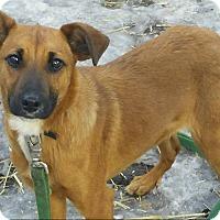 Adopt A Pet :: Scarlet - Eastpointe, MI