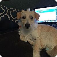 Adopt A Pet :: BEN - Rancho Cucamonga, CA