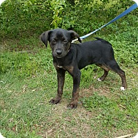 Adopt A Pet :: Lilo - Arlington, TN