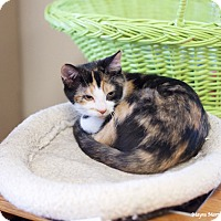Adopt A Pet :: Louise - Knoxville, TN