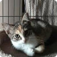 Adopt A Pet :: Josie - Pelham, AL