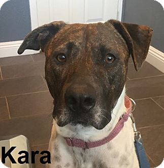 Boxer/Pit Bull Terrier Mix Dog for adoption in Lake Forest, California - Kara