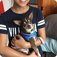 Adopt A Pet :: Pee Wee - Oakhurst, NJ
