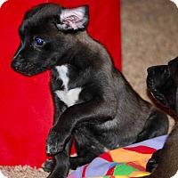 Adopt A Pet :: Rudy-ADOPTION PENDING - East Windsor, CT