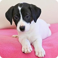 Adopt A Pet :: Emily Bronte - Berkeley Heights, NJ