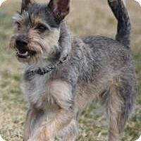 Adopt A Pet :: Mango - West Valley, UT