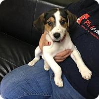 Adopt A Pet :: Suzie - Philadelphia, PA